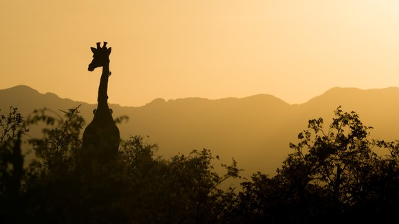 Africa Uncovered: 6 African Myths You Probably Thought Were True - BookAllSafaris.com