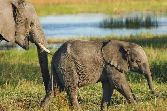 Elephant safaris, South Africa