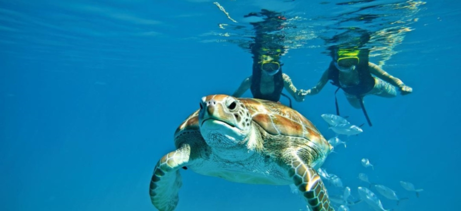 Turtles of Zante
