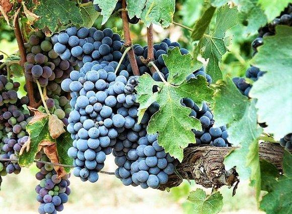 Bulgaria, wine, holidays