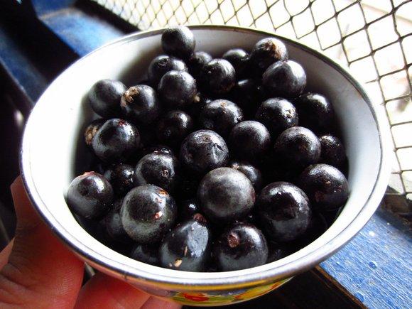 acai berries plate