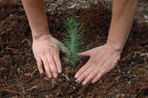 plant a tree on earth day