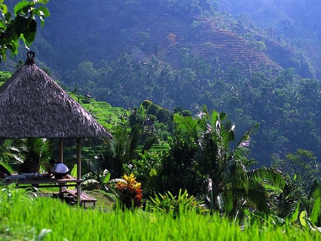 The picturesque paddy fields of Ubud, Bali