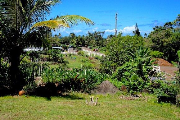 Farm in Oahu