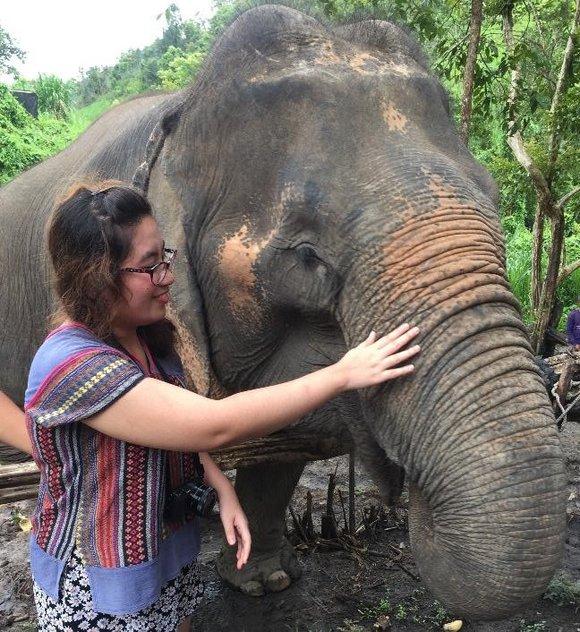 Asian elephants in Chiang Mai