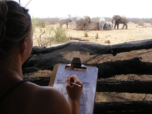 Conservation program in Africa
