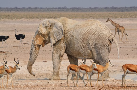 The Etosha National Park